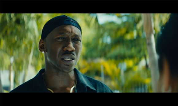 Coloring 'Best Picture' winner <i>Moonlight</i>