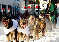 SONY'S XDCAM HD TAKES ON IDITAROD