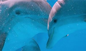 Spin VFX hits the water for  'Dolphin Tale 2'