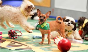 Puppy Bowl scores with Discovery